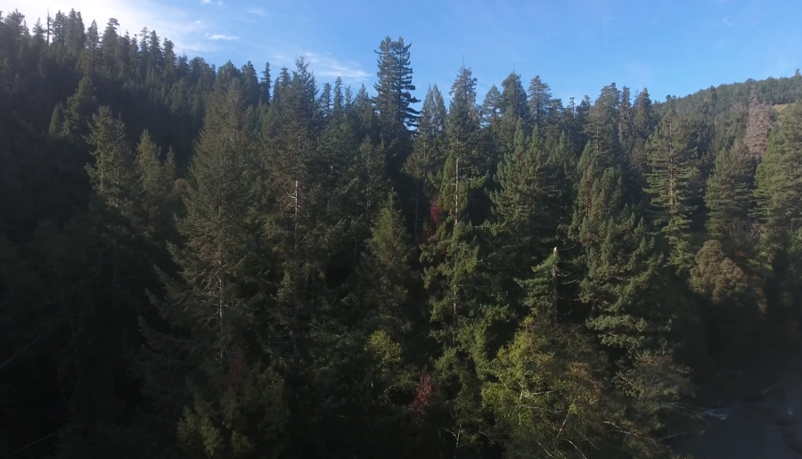 Tallest Tree Ever Recorded