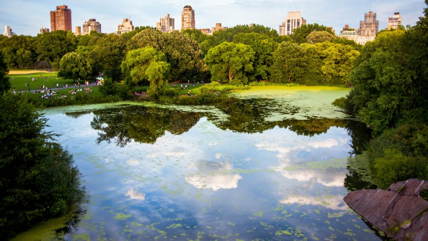 Urban Ecology –  The nature in New York